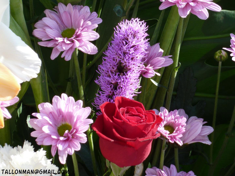 Flores (19)