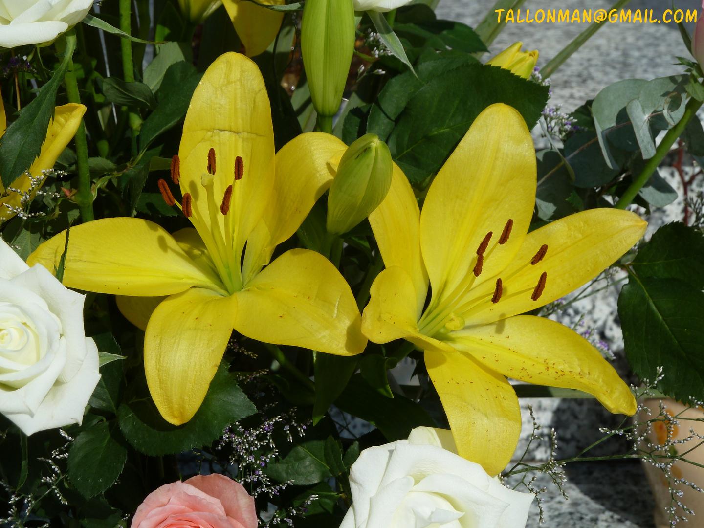 Flores (23)