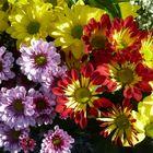 Flores (5)