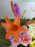 Flores (50)