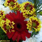 Flores (56)