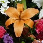 Flores (57)