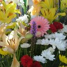 Flores (6)