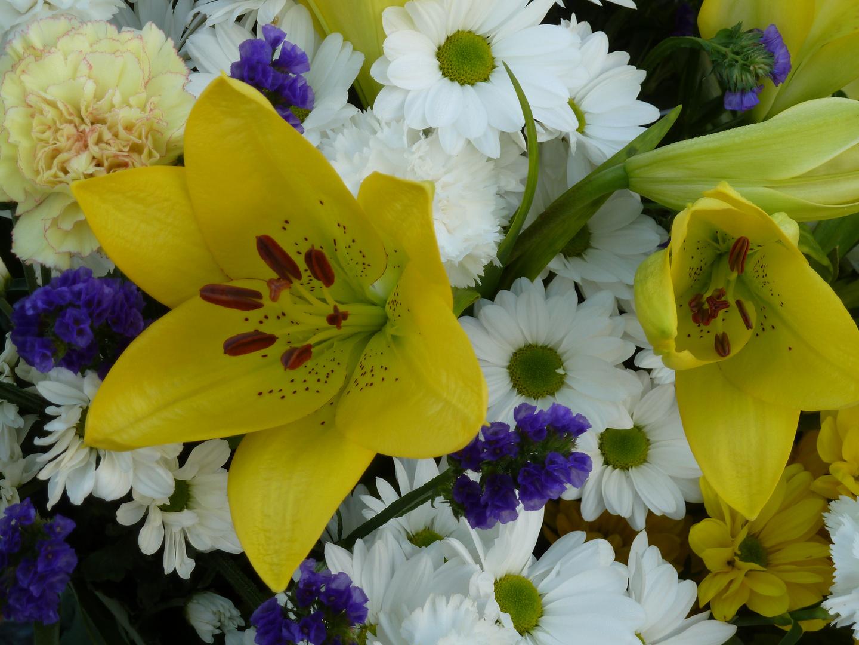 Flores (7)