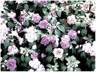 flores --