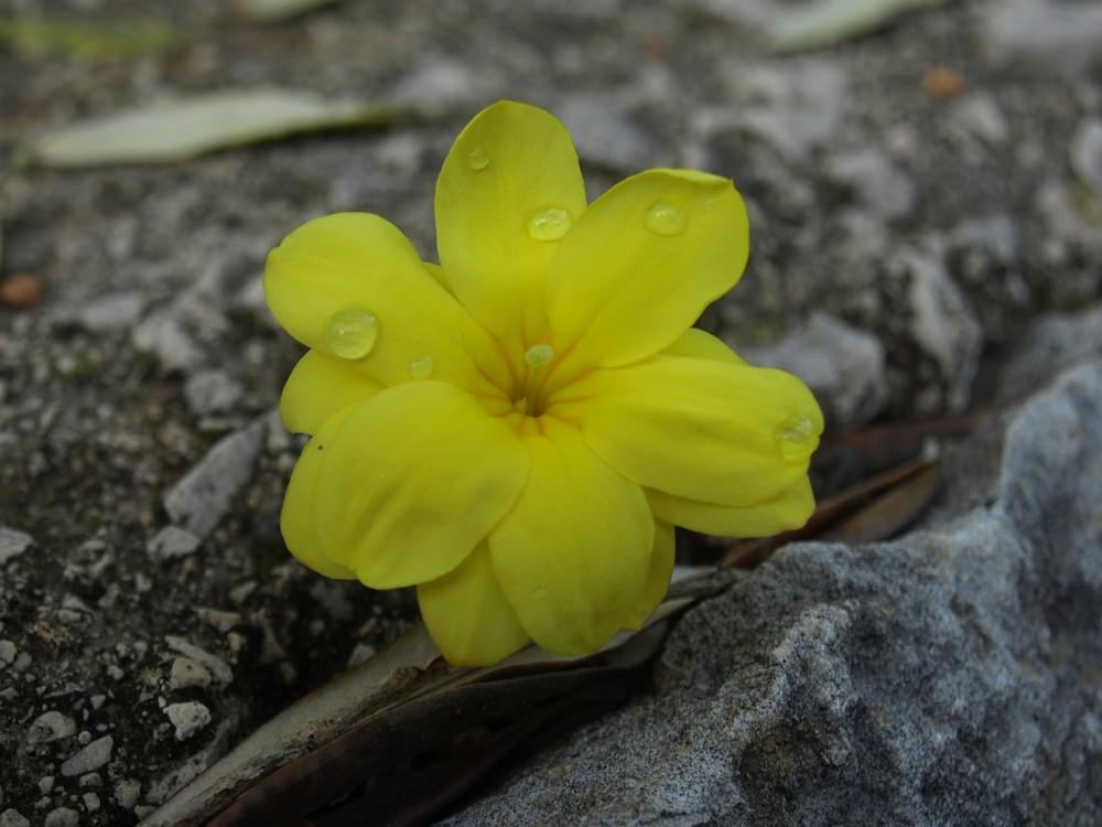 Flores al hazar...