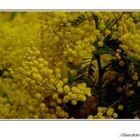 Flores amarillas...