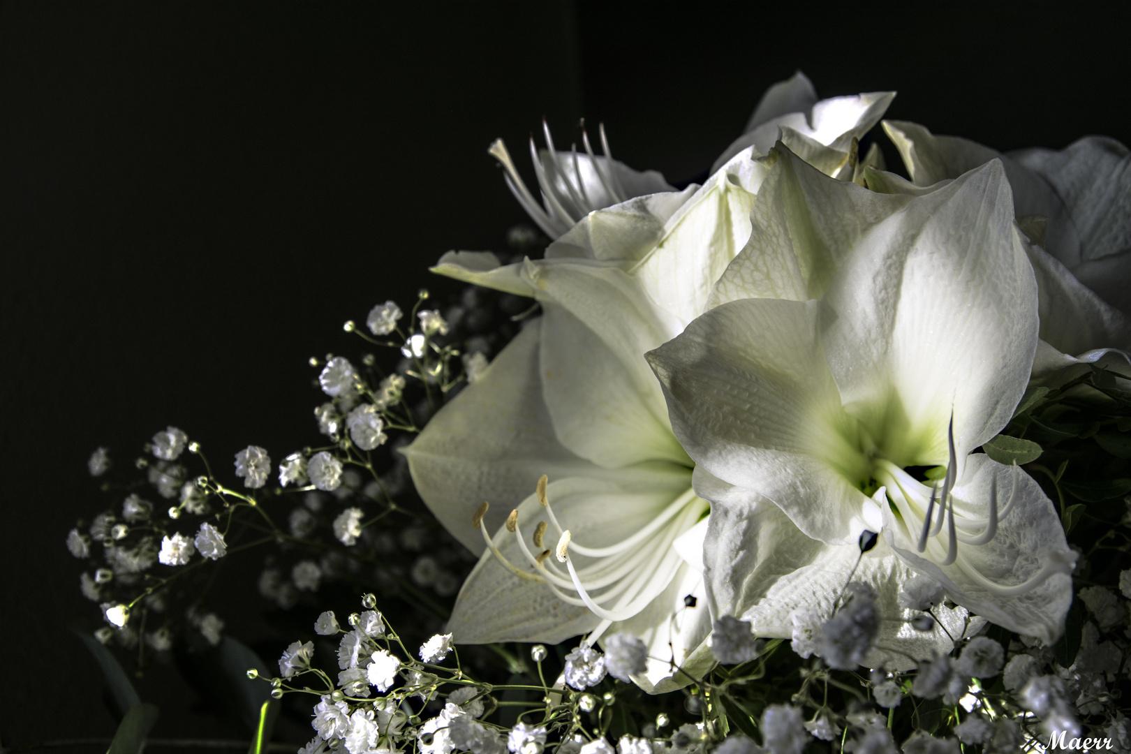 Flores blancas para Pepe Jaime