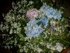 flores de bosque