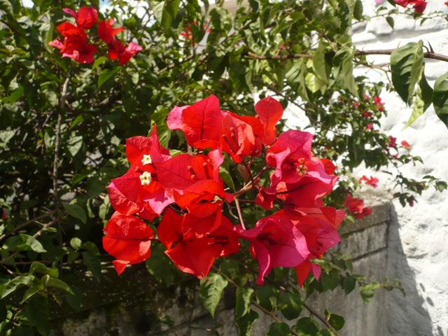 Flores de cementerio II