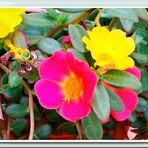 Flores de mi Terraza.-2
