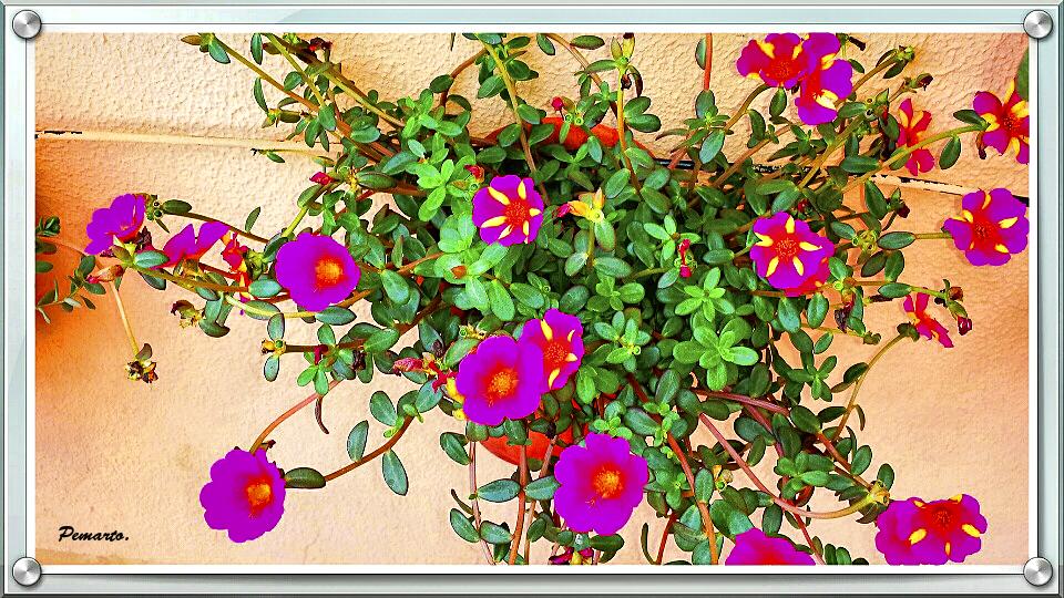 Flores de mi terraza.