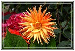 Flores del jardin de Benarum I