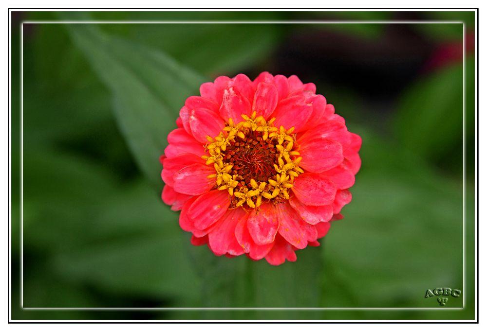 Flores del jardin de Benarum II