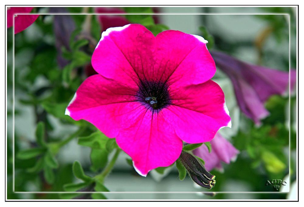 Flores del jardin de Benarum III