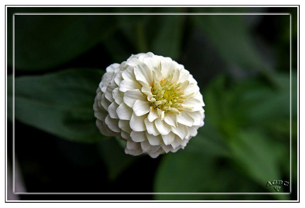 Flores del jardin de Benarum IV