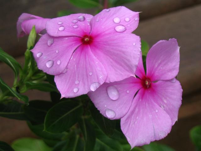 Flores despues de la lluvia