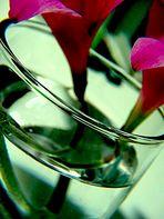 Flores en Agua...