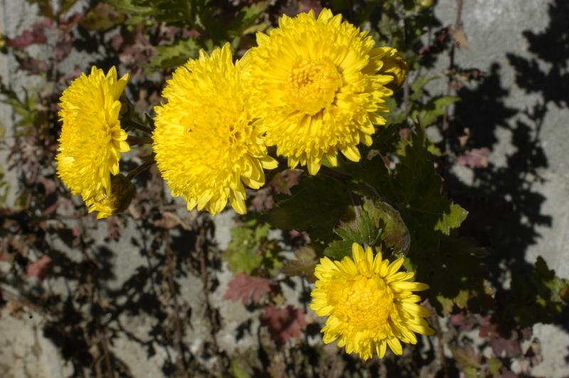 Flores en amarillo