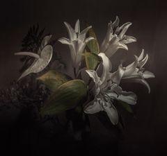 """"""" Flores en la sombra"""""""