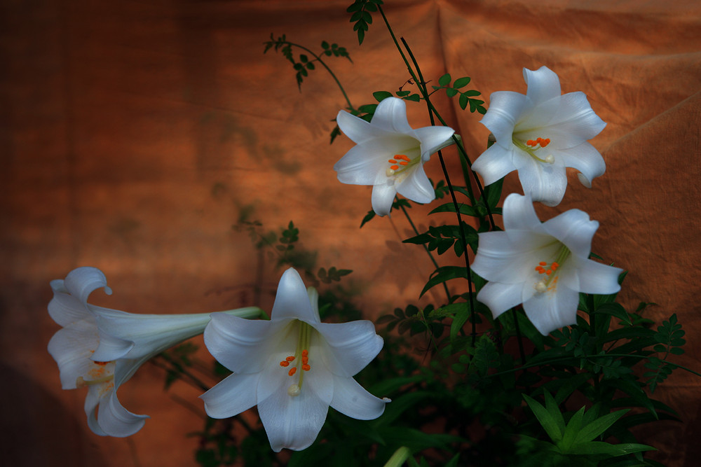 """Flores en la sombra"" lX"