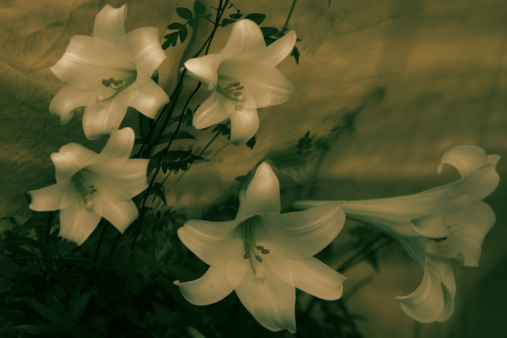 """""""Flores en la sombra"""" Vll"""