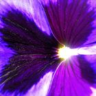 flores en primavera-1