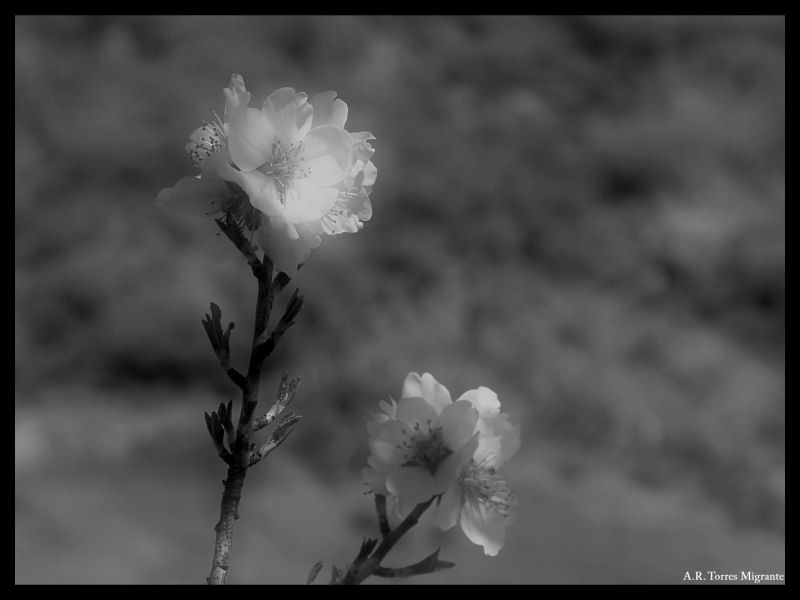 Flores en softer
