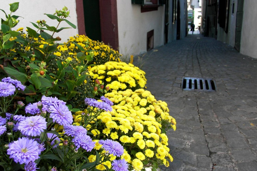 Flores, flores e flores...