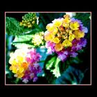Flores * Flowers