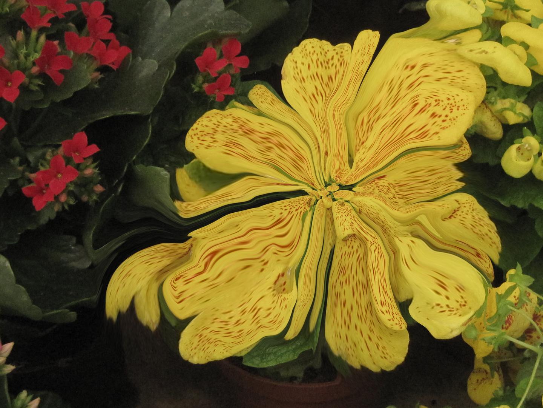 Flores licuadas