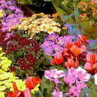 Flores multicolor en la Rambla de la Flores de Barcelona