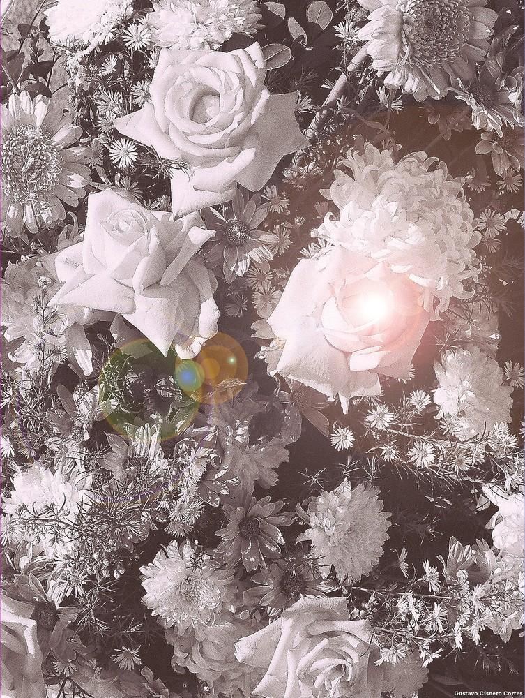 Flores para Bellas damas