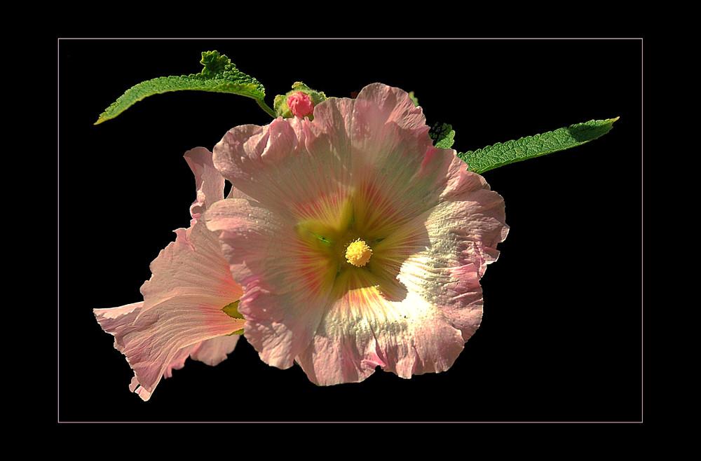 Flores para el domingo # Blumen für den Sonntag