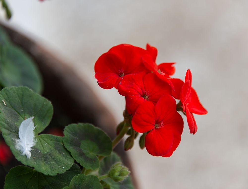 Flores Solitarias.