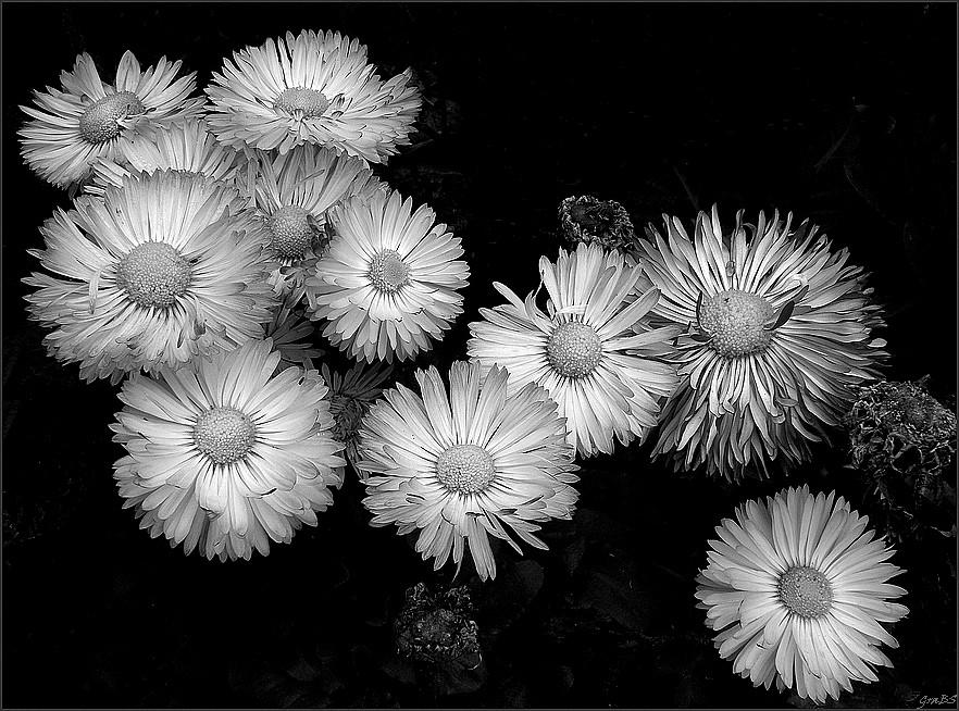 Flores y soles II