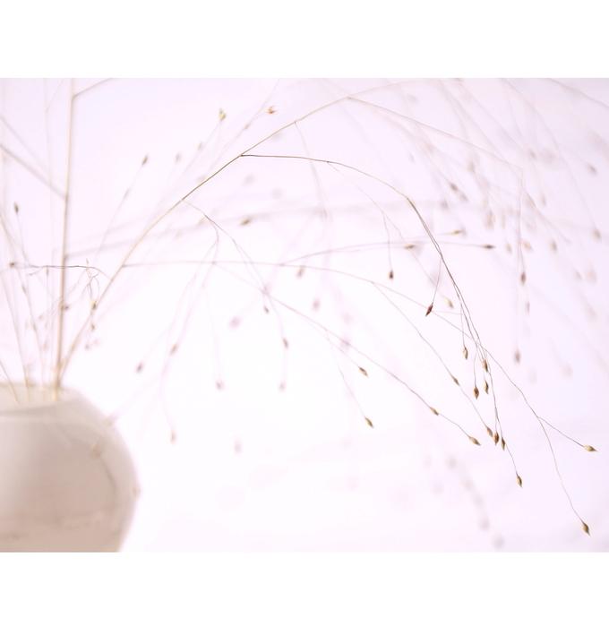 [ florescence ] 05