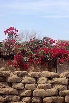 Flores&piedras de barro