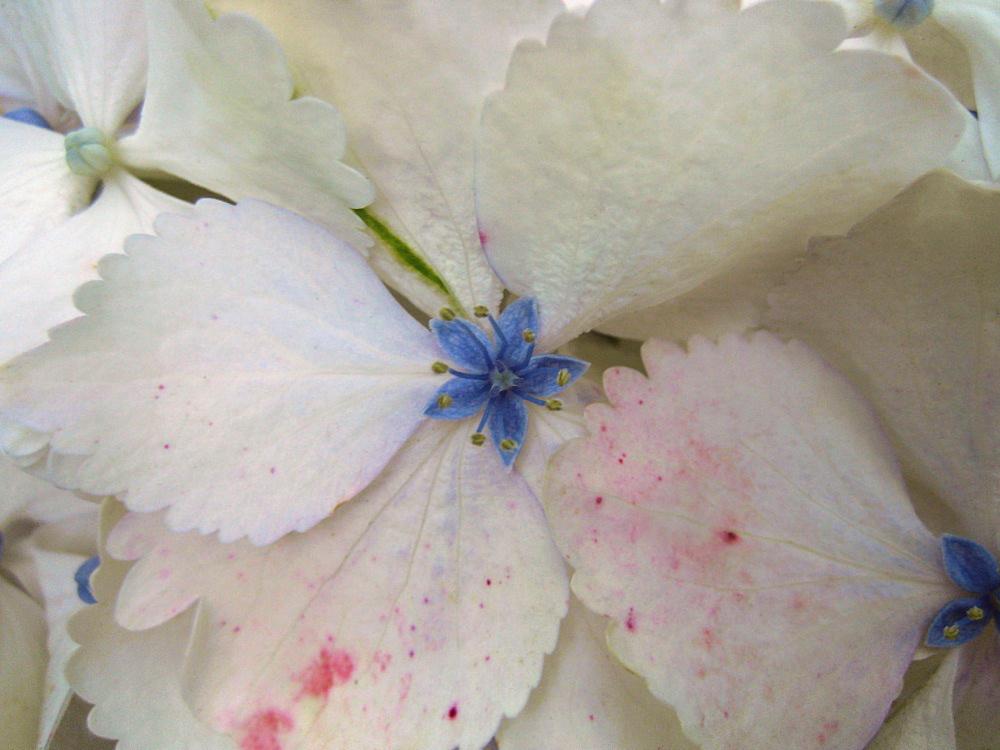 Floret