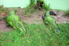 florida - Alligator 3