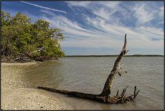 Florida   alligators paradise  