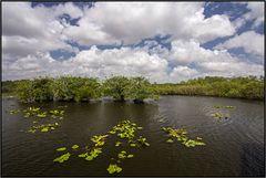Florida   eco systems  