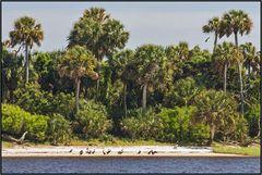 Florida   refuge  