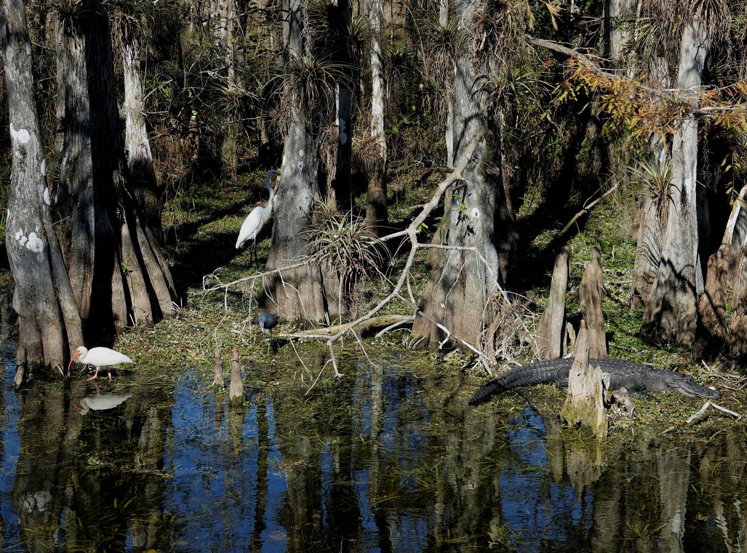 Floridas schöne Seite