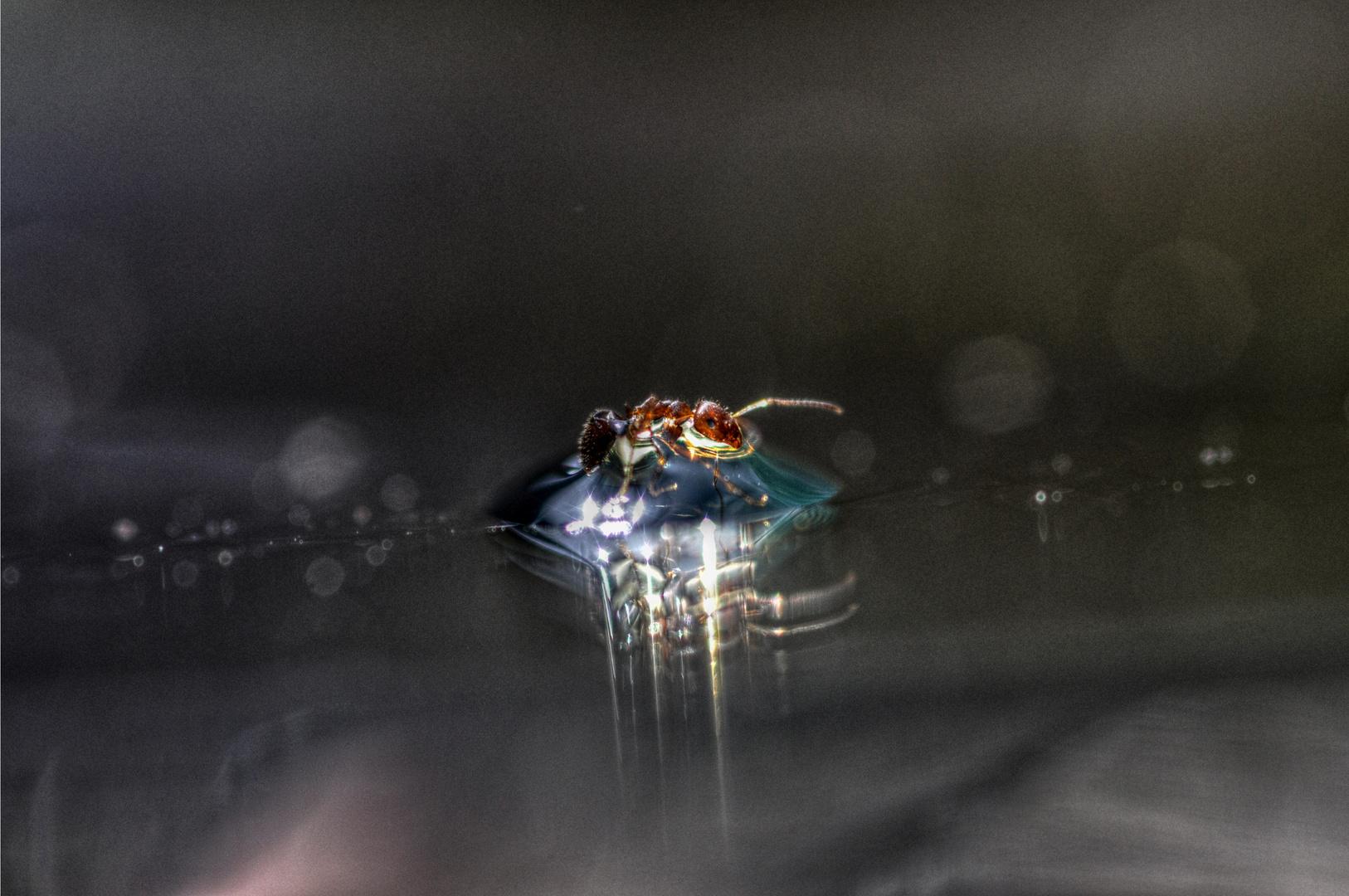 flotando mi fragilidad sobre luz y agua...
