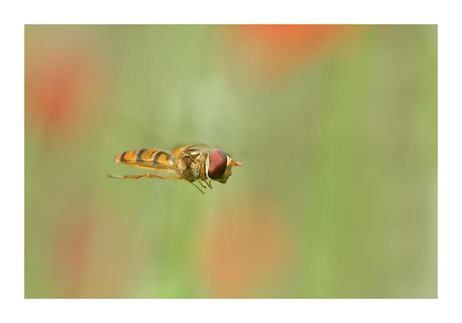 flotte Fliege...