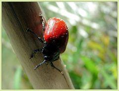 flotter käfer...