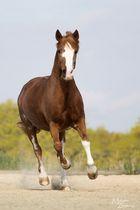 Flottes Pony