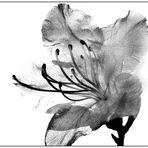 flower-2006#11