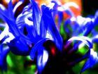 flower abstracta